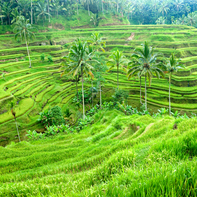 https://www.travelersjoy.com/blog/Bali-Ubud-honeymoon.jpg