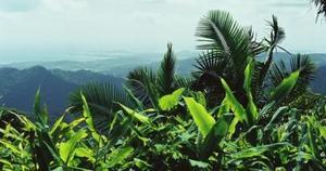 80 ECS Rainforest 7 vista.jpg