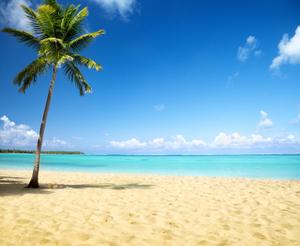 palm&beach.jpg