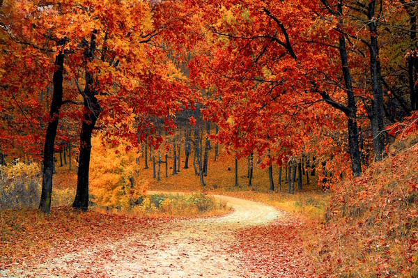 honeymoon travel fall autumn red season thumb 600x399 2006 Our Top 5 Fall Honeymoon Destinations in the U.S.