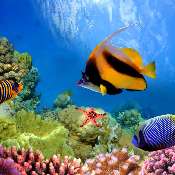 Fiji-Great-Astolabe Reef-Honeymoon_Adventure_Ideas.jpg