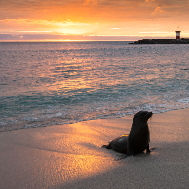 Off-the-Tourist-Path_honeymoon-Galapagos.jpg