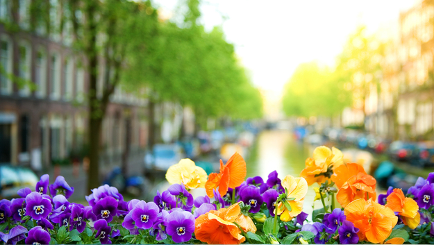 Amsterdam_honeymoon_flowers.jpg