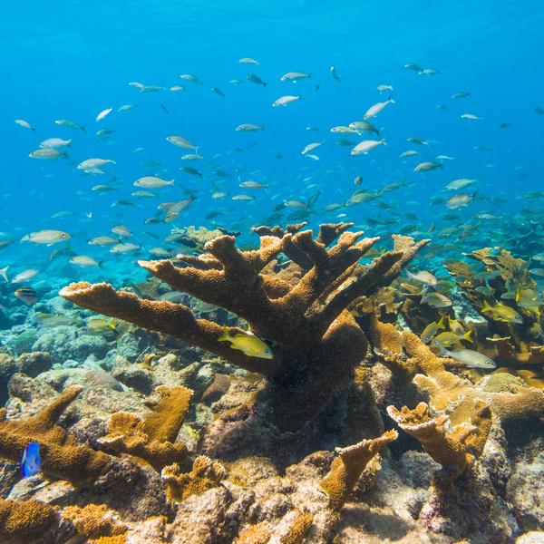 Aruba_underwater_4.jpg
