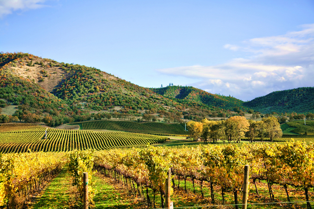 top_honeymoon_destinations_USA_California_wine_country.jpg