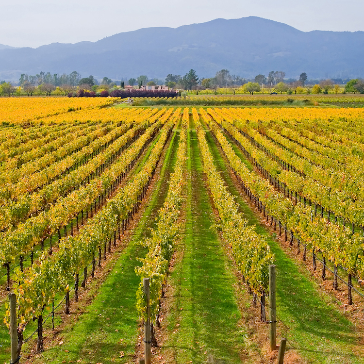 The Essential Napa Valley Honeymoon Guide | Traveler's Joy